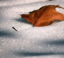Old Man Winter has Arrived by Sandy Woolard