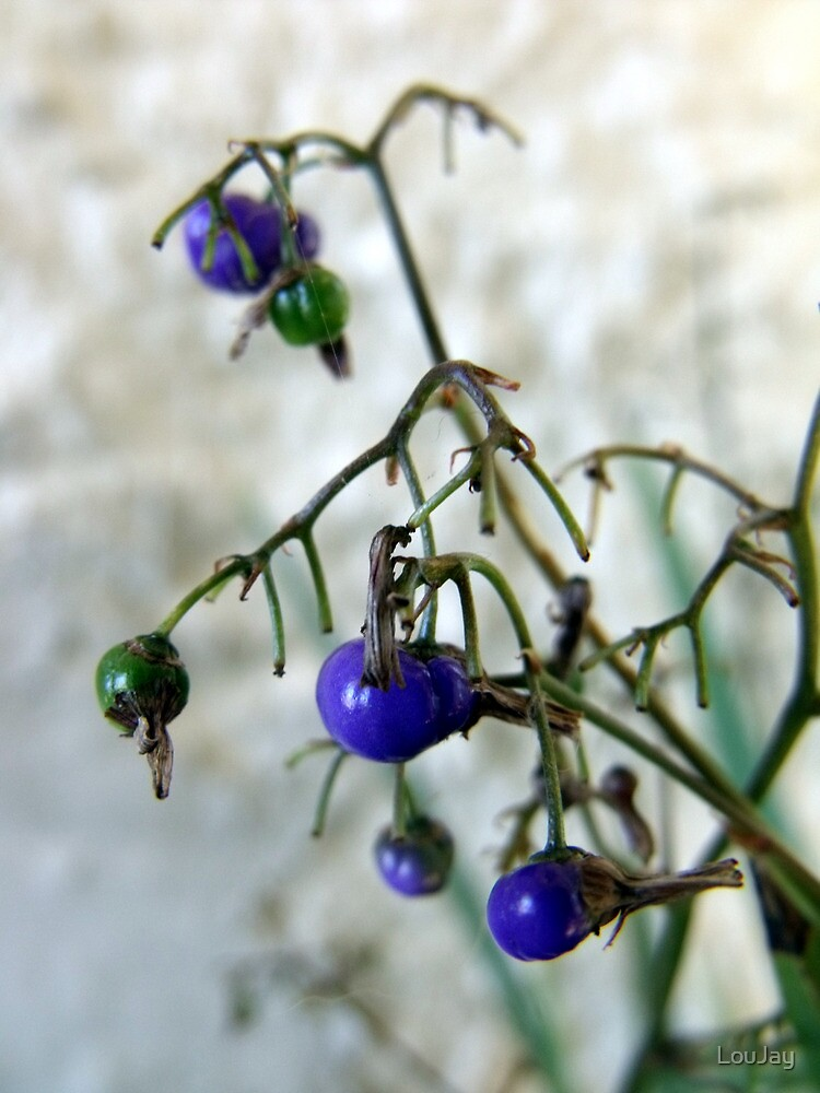 Blue Berries For Christmas by LouJay