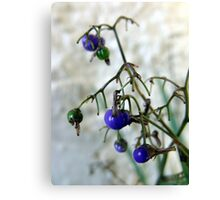 Blue Berries For Christmas Canvas Print