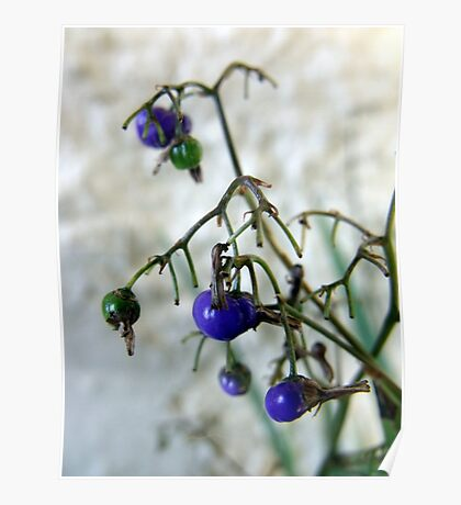 Blue Berries For Christmas Poster