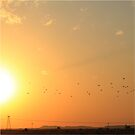 Fly Me To The Sun... by Qnita
