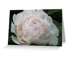 White Peony Bloom Greeting Card
