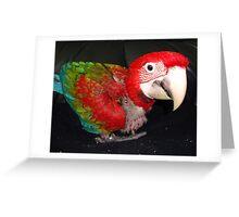 macaw 10 weeks Greeting Card