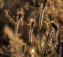 Catch the Light... by GerryMac