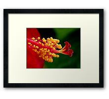 Red Hibiscus Center Framed Print