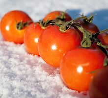 Tomatoes on the vine in the snow by Squawk