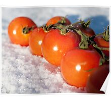 Tomatoes on the vine in the snow Poster