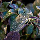 Sage in Winter by Zeanana