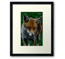 Prowling Fox Framed Print