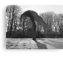 Tree In A Freeze Metal Print