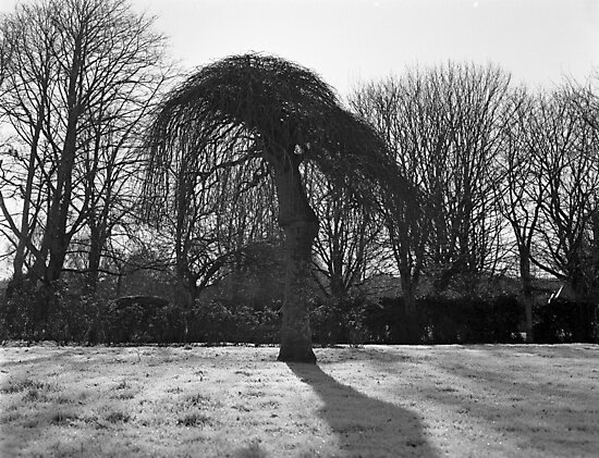 Tree In A Freeze by rorycobbe