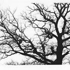 My favorite Oak tree by Anette Ax Richardsdotter