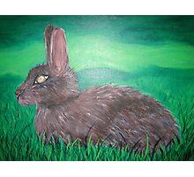Wild rabbit in field Photographic Print