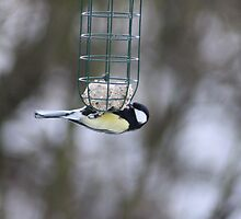 Scraping the bottom of the feeder  by David Bass