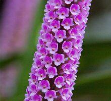 Flowers - Botanical Garden Munich by Melanie PATRICK