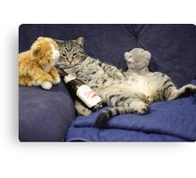 Just me, my beer, and my pussies...  Canvas Print