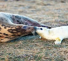 Donna Nook Grey Seal Colony  by Paul Thompson Photography