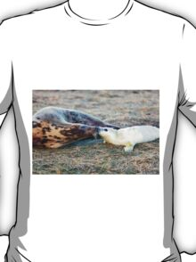 Donna Nook Grey Seal Colony  T-Shirt