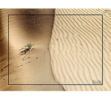Life on the Desert Dunes Photographic Print