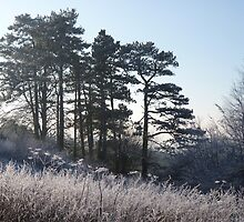 Frosty Hillside by Tom Clancy
