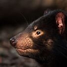 Tasmanian Devil by Danielle  Miner