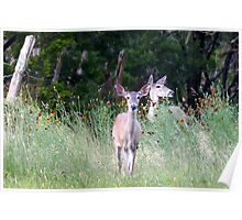 Deer Among The Wildflowers Poster
