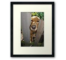 Sweet Puppy Poopsie Framed Print