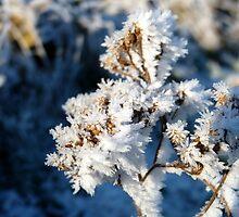 Winter Petals by Tom Clancy
