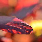 Rich Autumn Feeling by Tamara Al Bahri