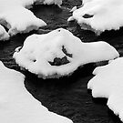 Nature's Rorschach by Tim Haynes