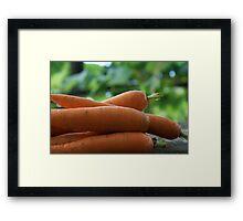 Fresh Carrots Framed Print