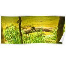 Daintree Forest - Mossman Gorge - Trek 11 Poster