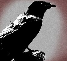 The Waiting Raven by DLFreeman