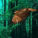 Hawk by billfox256