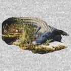 American Alligator by TravlynWomyn