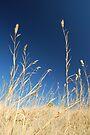 Salt Grass by Tori Snow