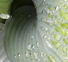 Rain on Leaves by Vicki James
