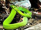 Green Mamba by Veronica Schultz