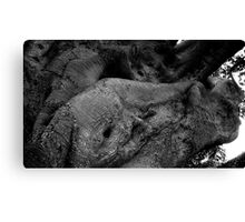 Nature's Freak Canvas Print