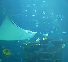 lonely sting ray by tiffany09