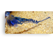 From The Rockpool - Blue Bottle Canvas Print