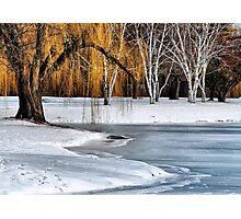 Trees Of Winter  Photographic Print