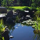 the garden pond by janfoster