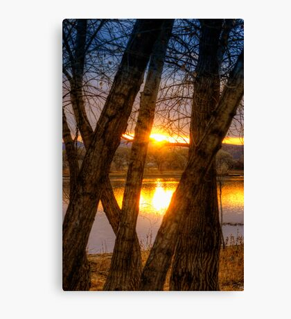 Trees in my Way...Wait Canvas Print