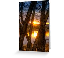 Trees in my Way...Wait Greeting Card