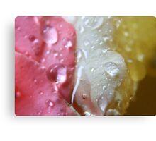 Droplets 11 - Neopolitan IceCream Canvas Print