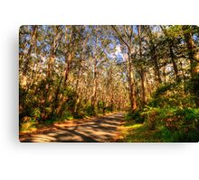 Light & Shadows - The Otways - The HDR Experience Canvas Print