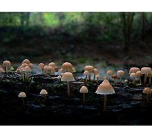 little pink mushrooms Photographic Print