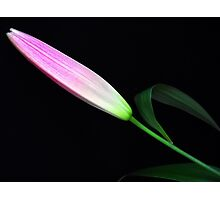 Gentle bud. Photographic Print
