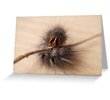 Curly Caterpillar Greeting Card